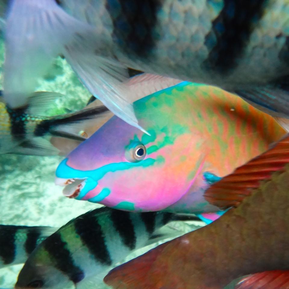 Ikan 2