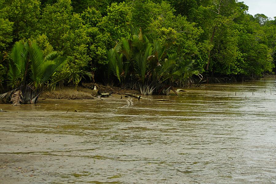 Indonesia 116 Pantai Timur Sumatera Selatan Benyamin Lakitan