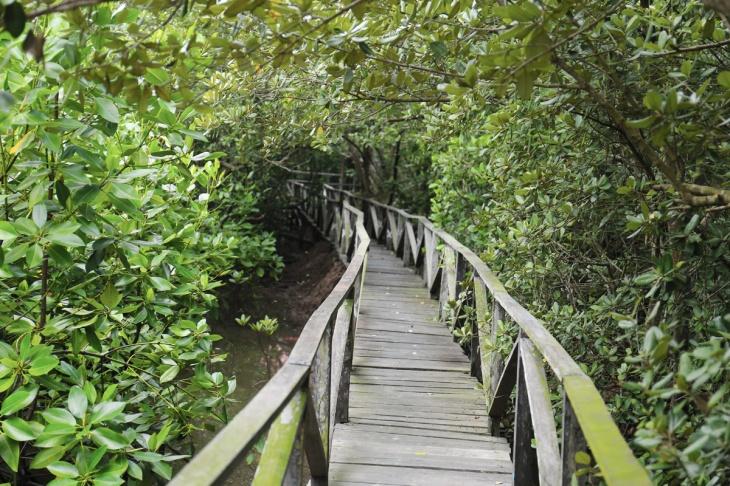 Mangrove Balikpapan 1