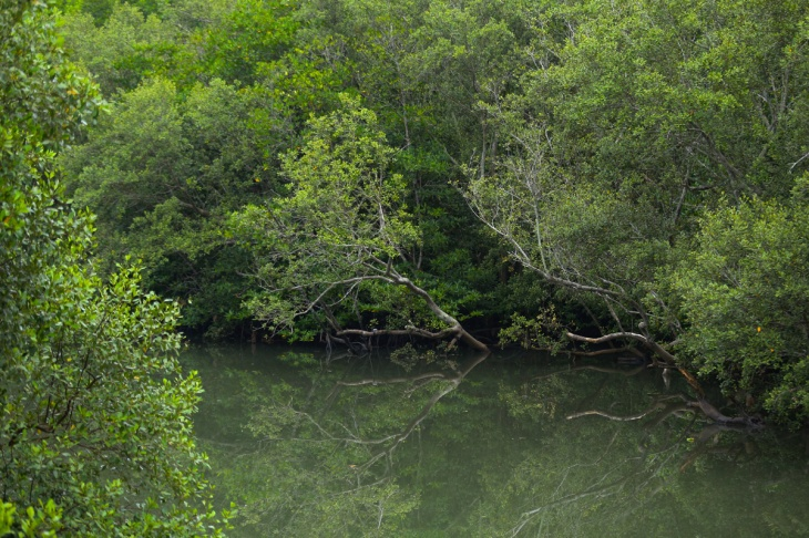 Mangrove Balikpapan 2