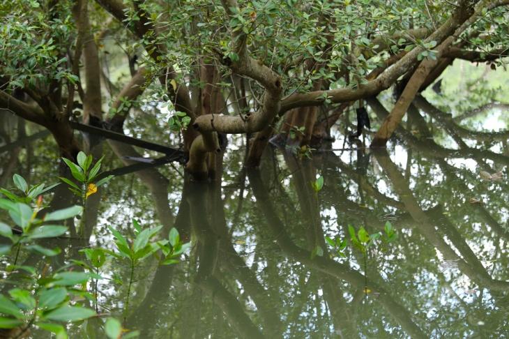 Mangrove Balikpapan 3