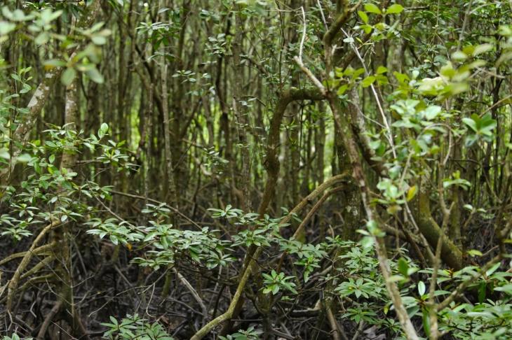 Mangrove Balikpapan 4