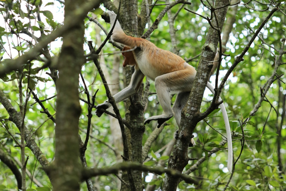 Mangrove Balikpapan 5