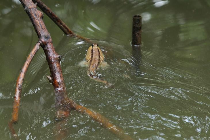 Mangrove Balikpapan 6