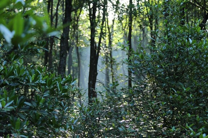 Mangrove Tarakan 1