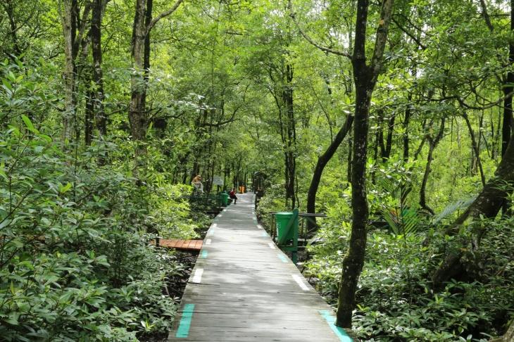 Mangrove Tarakan 3