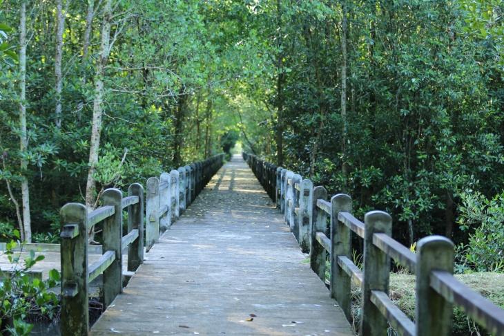 Mangrove Tarakan 4
