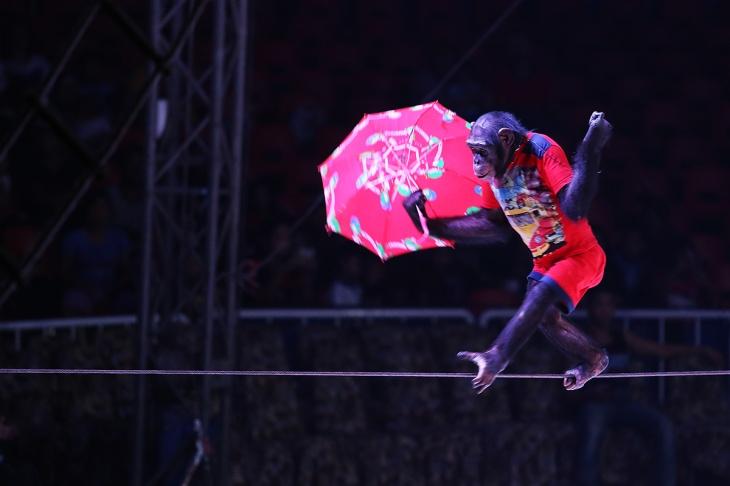 Oriental Circus @ Balikpapan 03