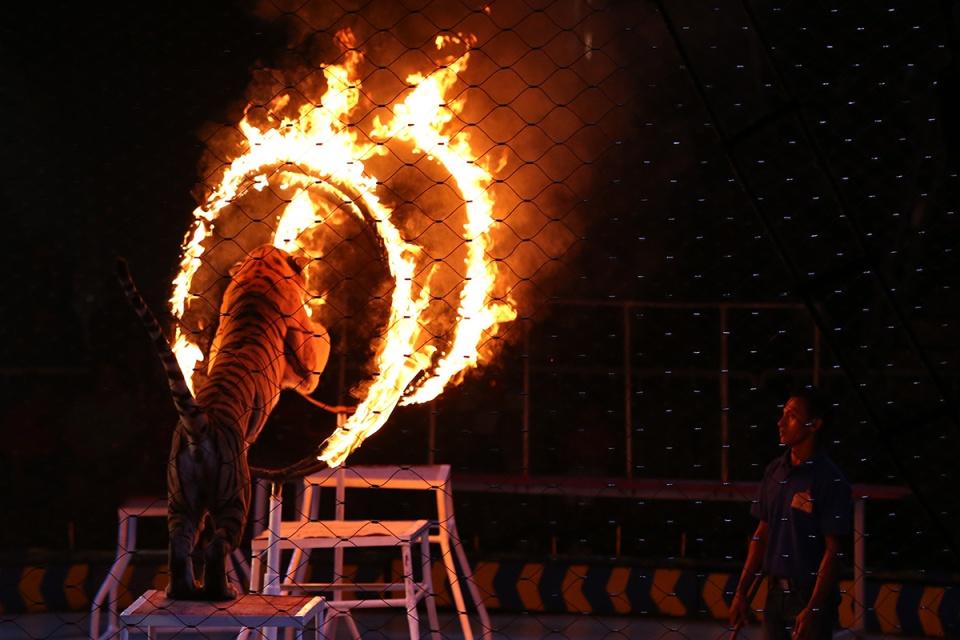 Oriental Circus @ Balikpapan 05
